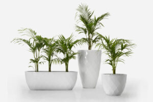 3 different sized white vases planter by Vondom with palms growing out of them.